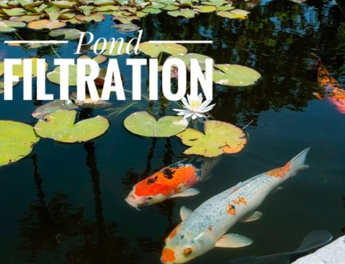 Reasons Why You Need To Set Up A Filtration System For Your Pond