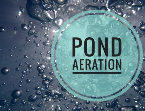 Pond Aeration: The Definitive Guide