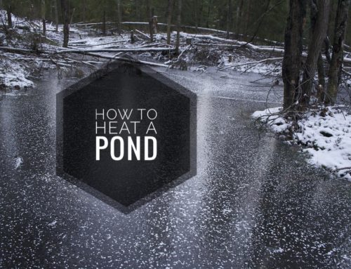 How To Heat A Pond: A Complete Guide